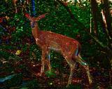 deer - 305