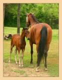Horses 15
