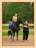 Horses 31