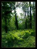 Natures Palette 03