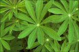 Very green plants