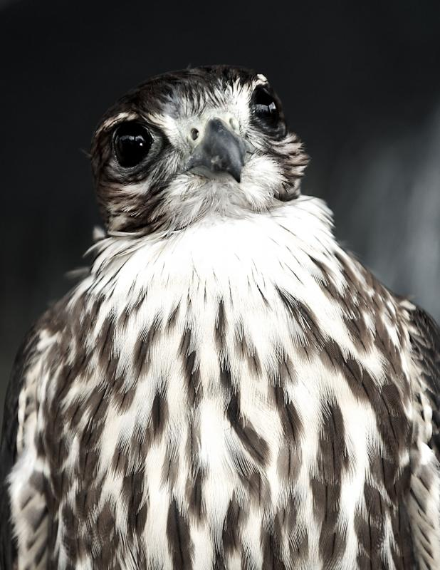 Mono Merlin