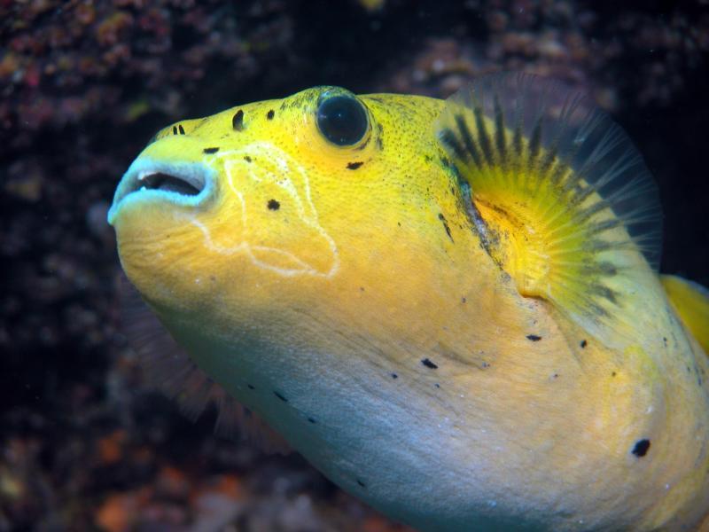 Galapagos 18.JPG