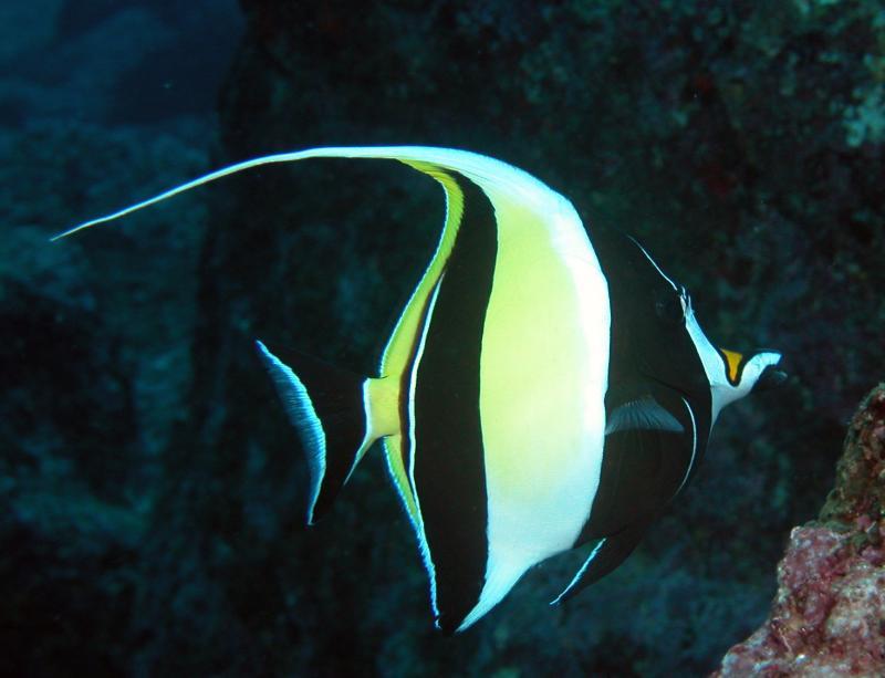 Galapagos 26.JPG