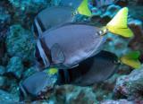 Galapagos 22.JPG