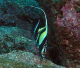 Galapagos 24.JPG