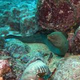 Galapagos 31.JPG