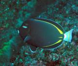 Galapagos 53.JPG