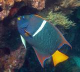 Galapagos 75.JPG