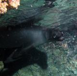 Galapagos 78.jpg
