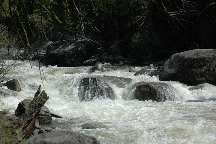 Yellowstone Park Stream