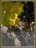 November 04 - Autumn Shadows