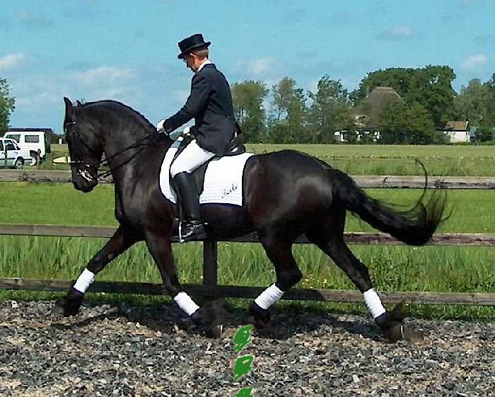 Beike extended trot
