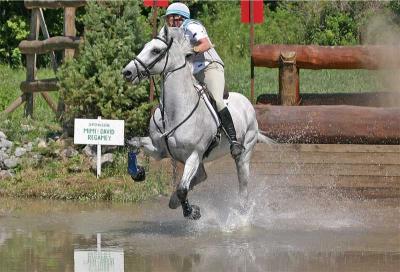 This-way-horse-#53.jpg