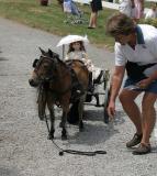 Carriage-Horse.jpg