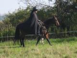 Zorro Alan riding.JPG