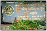 Harvard in Siem Reap