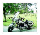Memorial Day Harley
