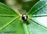 Tiny Macro Bug August 19 *