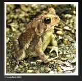 Toad September 25 *