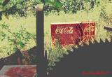 COKE in the FIELD
