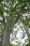 Cypress 1