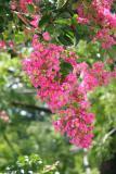 Flowering tree 2