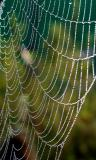 Spider's web in morning dew