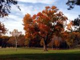 wSugarloaf Trees13.jpg