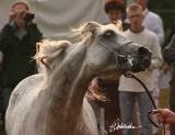 Janow Podlaski Arabian Horse Show  2005