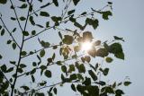 DO_Suntest_inframe.jpg