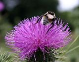 Pollen Hunting II