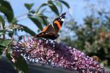 FLOWERS & GARDEN/WOODLAND WILDLIFE
