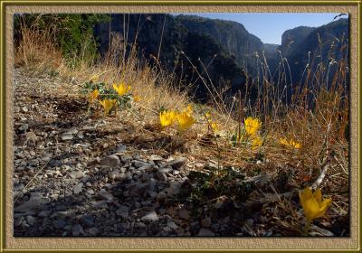 The Vikos gorge, Greece