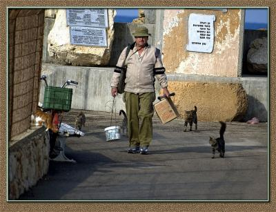 A fisherman with cats