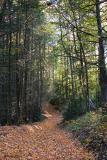 WoodlandPath