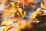Hakone Japanese Garden Saratoga