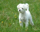 The Puppy 2.JPG