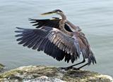 Heron 21