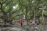 Largest Banyan Tree