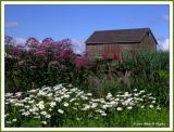 Summer on LindenHill Farm III