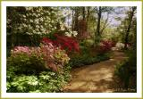 Morning Azalea Path