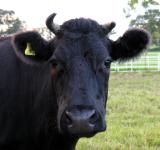 - 22nd October 2005 - moo......