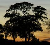 - 26th October 2005 - Tree
