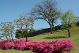 Flowers Near Castle Wall