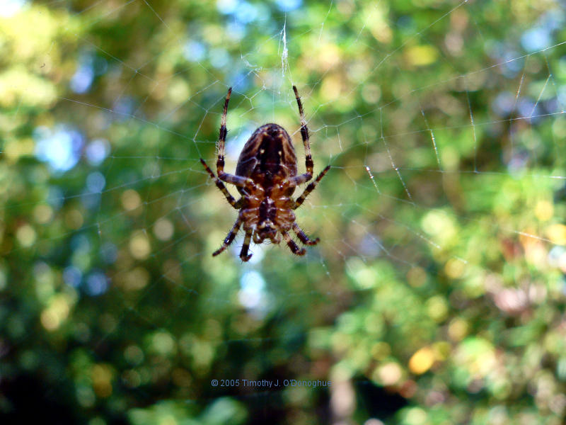 Stained Glass Spider