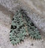 green-black  --  not ID'd