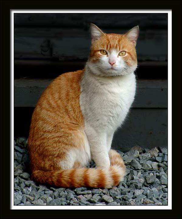 Cat 287