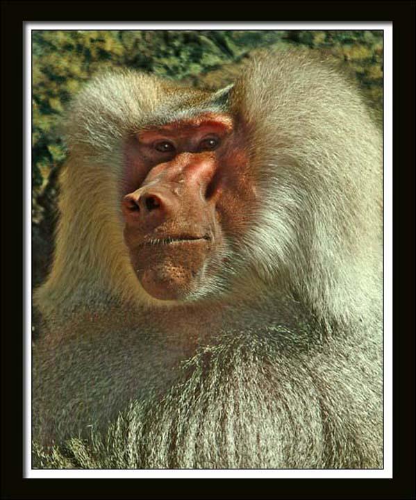 Monkey 140