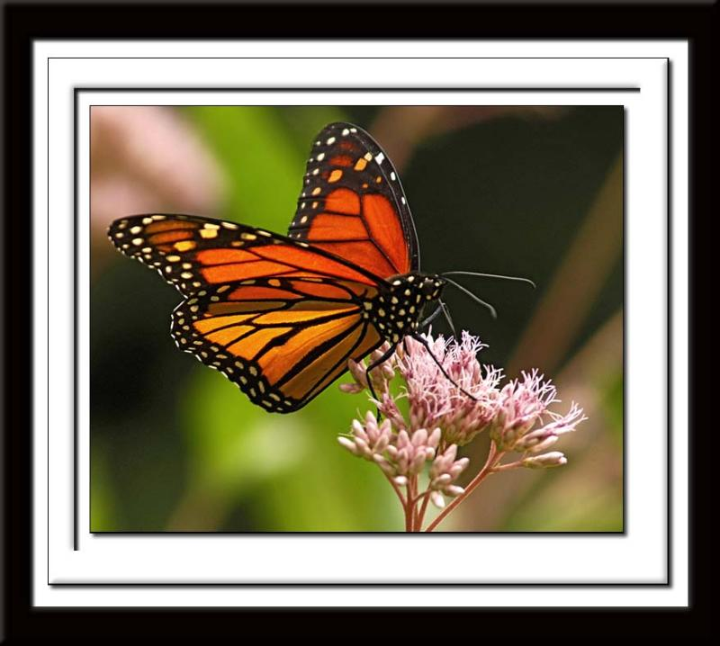 Butterfly 122